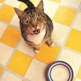 Mon chat prend du poids, comment le faire maigrir ?