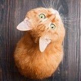Faire manger son chat en jouant, le secret pour lui permettre d'être heureux ?