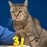 Le chat le plus vieux du monde ? Il s'appelle Nutmeg et a 31 ans !