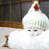 Fatigués par les fêtes de fin d'année, ces chats s'offrent la plus douce des siestes ! (Vidéo du jour)
