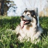 Game of Thrones : Summer, le chien-loup de Bran Stark est décédé d'un cancer