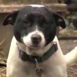 Il voit deux chiens enchainés, frappe à la porte et comprend son erreur (Vidéo)