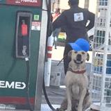 Ce chien errant adopté par le personnel d'une station service est devenu un héros