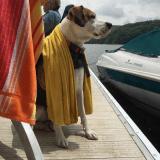 OliverBarkBark : le compte Twitter tenu par un chien très bavard