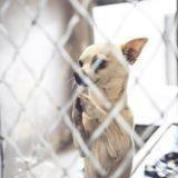 La prière d'un chihuahua qui a ému le Web et l'a sauvé