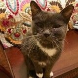 Abandonnée à 23 ans, cette chatte retrouve l'amour dans un foyer d'accueil pour animaux seniors
