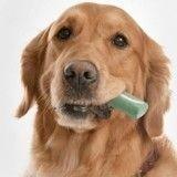 Mauvaise haleine : le chewing-gum pour chien, gadget ou indispensable ?