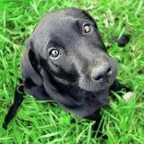 Apprendre l'ordre « assis » à son chien