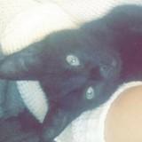 Justice pour Oréo, le chat défiguré à quelques mètres de chez lui