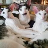 Ces chats ressemblent à Dobby l'elfe de maison de Harry Potter… et se sont emparés du Web !