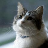 Oscar, le chat qui aurait prédit la mort de plus de 100 personnes