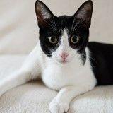 Où et comment bien acheter ou adopter son chat ?