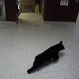 Vidéo surveillance de l'école : elle croit voir un chien dans les couloirs et pousse un cri quand elle comprend son erreur