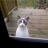 Le chat qui veut qu'on lui ouvre la porte (Vidéo)