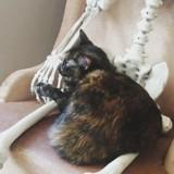 Halloween : Ce chat a décidé d'être ami avec un squelette !