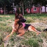 Renvoyé à cause de son caractère trop doux, ce chien policier a un nouveau travail qui lui va comme un gant