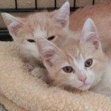 Découvrez comment ces deux chats frère et sœur, séparés après leur adoption, se sont retrouvés