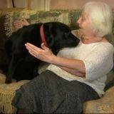Un labrador diagnostique le cancer de sa maîtresse avant le corps médical
