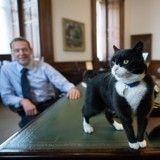 Non, Palmerston le chat du secrétaire d'Etat n'est pas un espion !