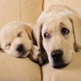 Fête des pères : les plus belles photos de chiots avec leur papa chien !