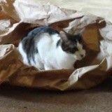 Ce chat joue avec un emballage en papier… et il adore ça ! (Vidéo du jour)