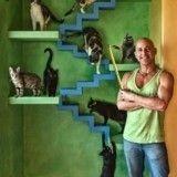 Amoureux des chats, cet homme a construit un véritable paradis pour ses 22 protégés !
