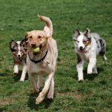 Le premier parc canin de Paris a ouvert ses grilles !