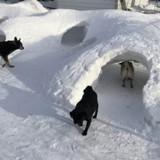 Ce maître a tout donné pour que ses chiens s'éclatent dans la neige (Vidéo)