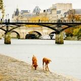 Avis aux Parisiens : votez pour un projet en faveur des chiens grâce au budget participatif !