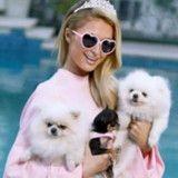 Les chiens de Paris Hilton ont leur propre maison, et elle est dingue (Photos)