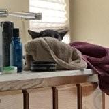 Elle prend son chat en photo : quelques minutes plus tard, son téléphone ne cesse plus de sonner !