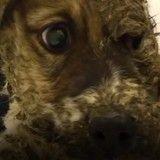 Transformé en statue de colle, ce chien s'en est miraculeusement sorti (Vidéo du jour)