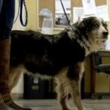Après 4 ans dans la rue, ce chien est identifié : la réaction de son maître est une douche froide pour tous
