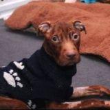 Patrick le chien miraculé : sa tortionnaire plaide non coupable