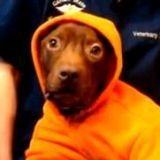 Patrick le chien miraculé : la vidéo hommage (Vidéo du jour)