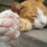 13 chats retrouvés avec des pattes fracturées à Caen, la police traque le coupable