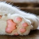 Des cadavres de chiens et de chats trouvés chez un éleveur, et ce n'est pas le pire !