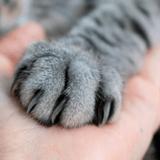 Quel est le meilleur soin des griffes pour chat en 2021 ?
