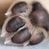 « C'était irrespirable » : une chienne enfermée 5 mois dans une cave
