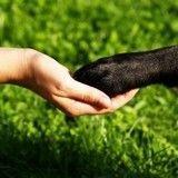 5 conseils aux Macron (et à tout nouveau maître) pour faire le bonheur de leur chien