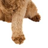 La triste réalité derrière ce chien debout dans une animalerie va vous faire bondir (Vidéo)