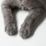 Elle décède en enterrant son chat, un détail a choqué tout le monde