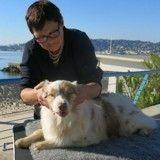 Les bienfaits du massage canin pour les chiens sportifs