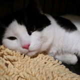 Né avec 6 pattes, le chat Pauly n'en a enfin plus que 4 !