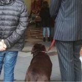 Un prêtre interdit à un chien de participer aux obsèques de son maître ; la réaction du toutou suscite l'indignation