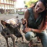 Delphine Wespiser appelle au secours des chiens abandonnés de l'île Maurice