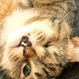 Ce chaton à l'apparence très particulière montre son vrai visage et séduit 200.000 personnes !