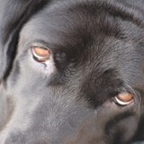 Mon chien a des pellicules : que faire ?