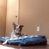Elle se couche dans le panier de son chien : la réaction du toutou émerveille tout le monde !
