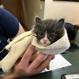 Rejeté à la naissance, ce minuscule chaton a beaucoup changé en deux ans !